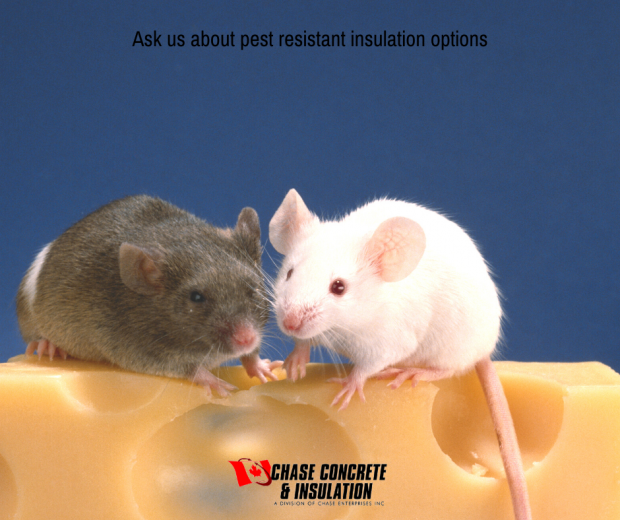 Pest Resistant Insulation Options